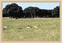 Veli Brijun - park
